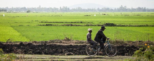 bicycling past the rice fields near Embu, Kenya