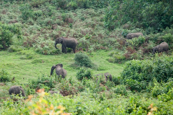 The elephants at the Castle Forest Lodge in Kenya