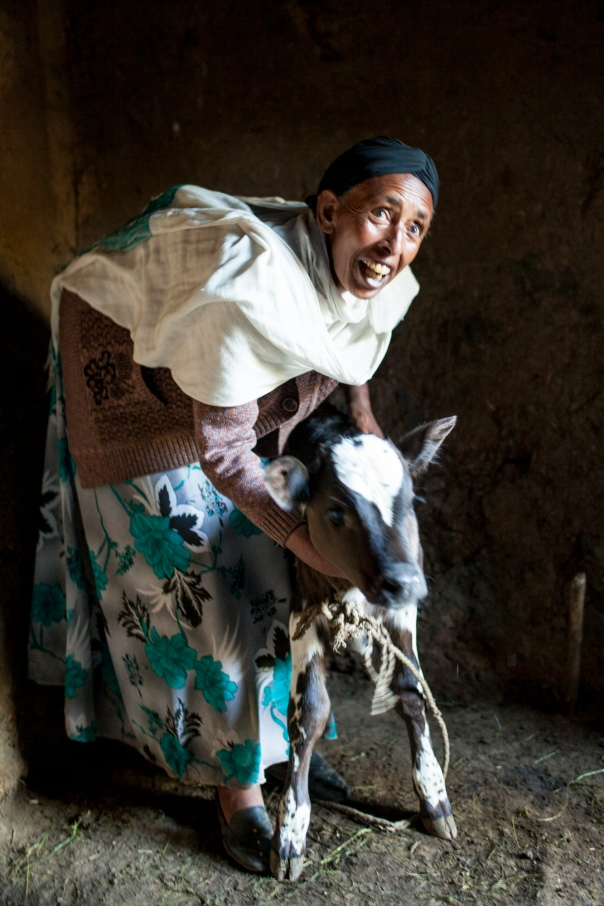 An Ethiopian widow expressing her joy over her new calf.