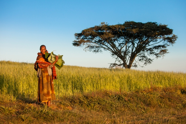 A woman carries banana leaves early in the morning outside Gojo.