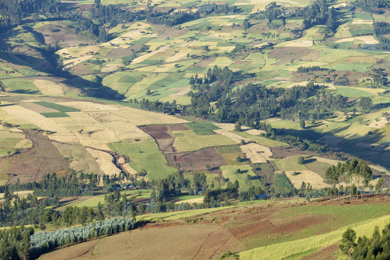 patchwork of farms in Ethiopian highlands