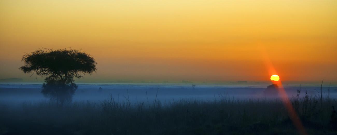 Sunrise and acacia tree in Africa, (the cliche Africa shot)