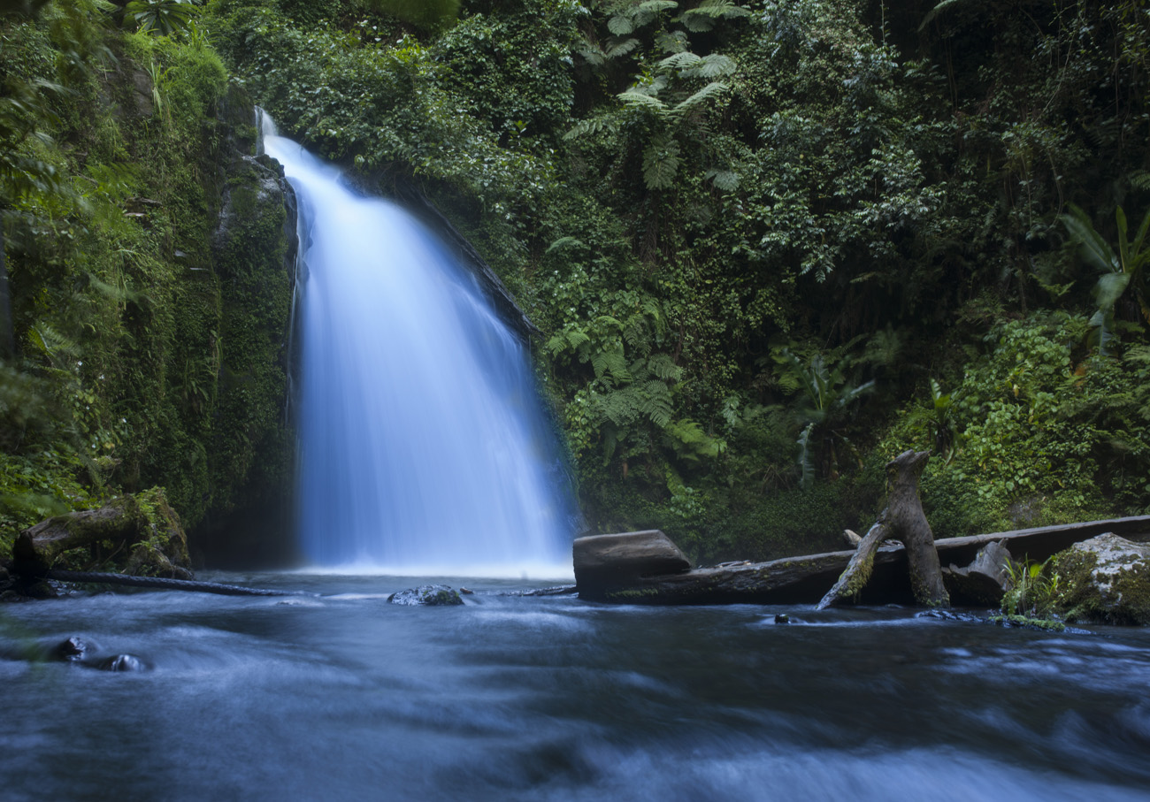 lush waterfall in the cloud forest on Mount Kenya, Africa
