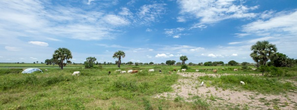 village and livestock along the white nile in South Sudan