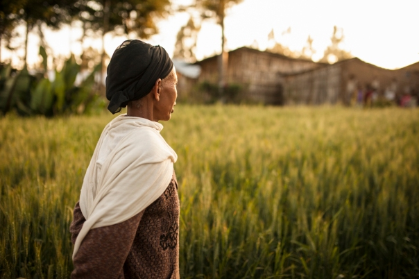 A widow in Ethiopia surveys the small field where she grows wheat for her family.